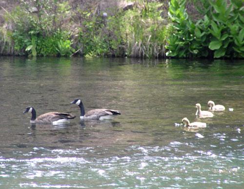 Nature Park Near West Covina
